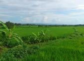 Výhled na rýžová pole se nikdy neokouká